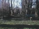 arbre03.jpg