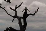 cochihza_arbre_web.jpg